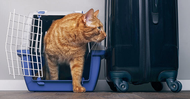 10 Considerations For Airline Travel With Your Cat_1