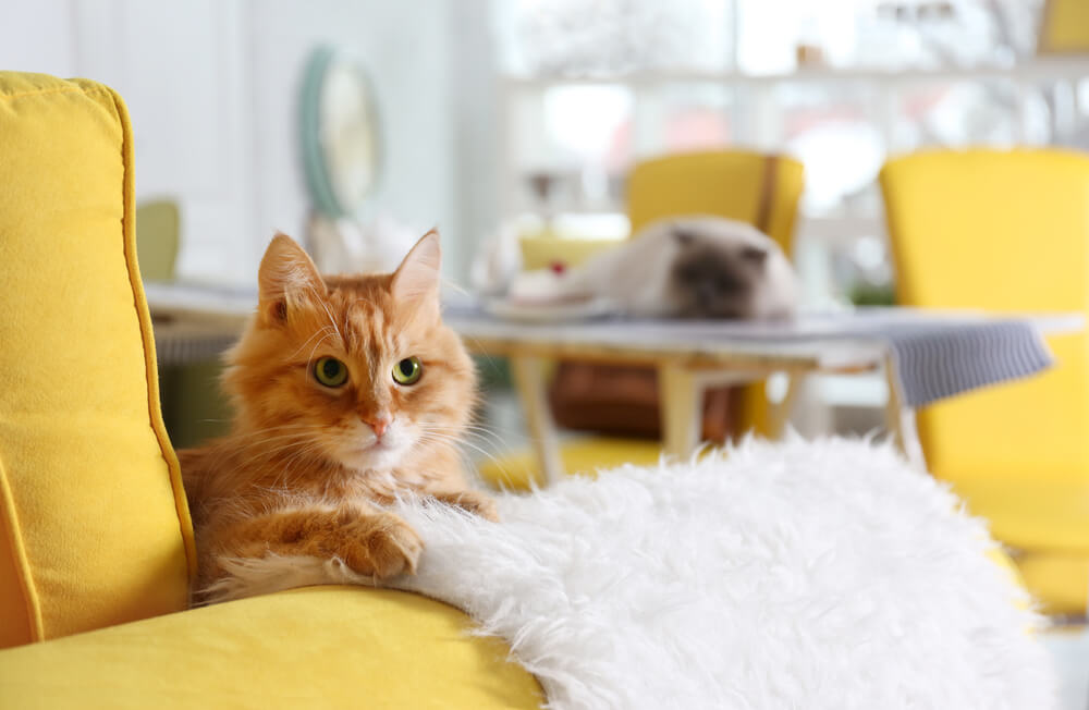 Ginger cat knitting a fluffy blanket on a yellow sofa