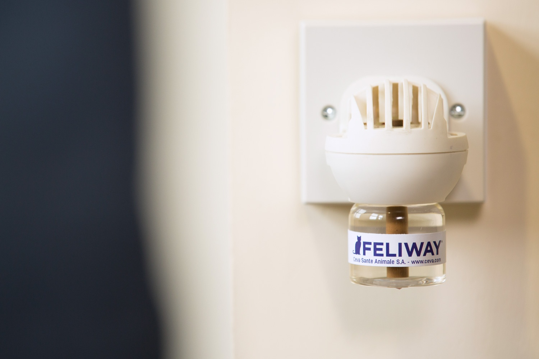 Feliway Classic Duffiser plugged to help keep cat calm