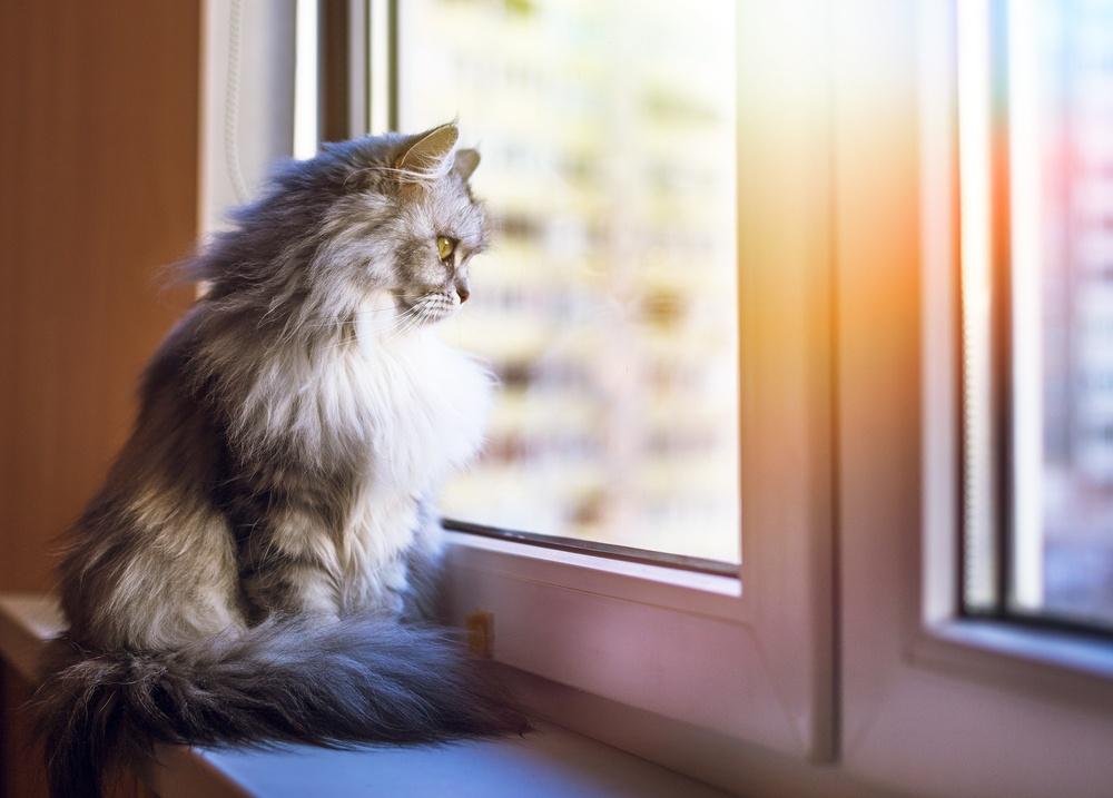 cat watching through the window