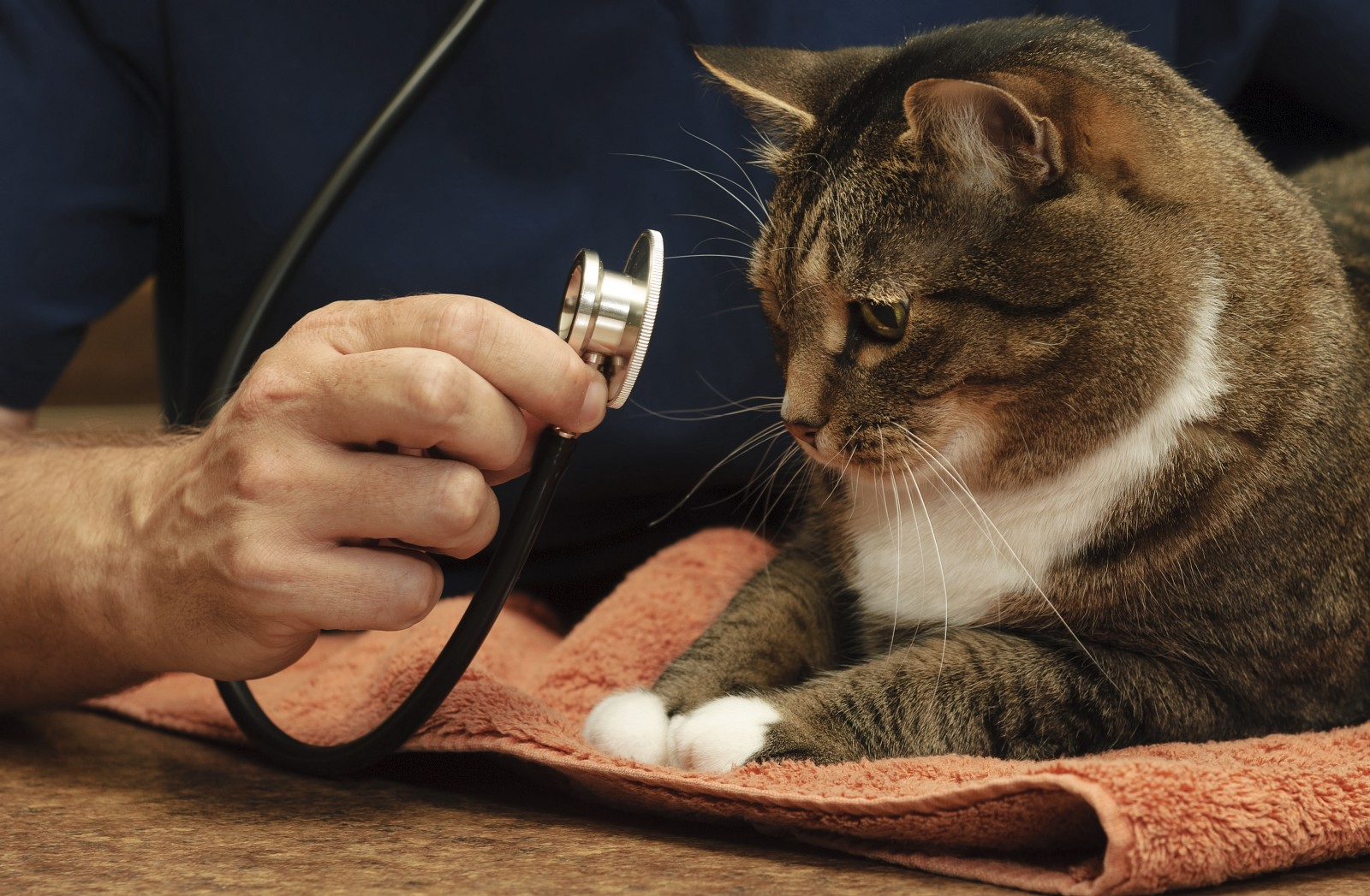 reducing cat stress during veterinary visits - HD1600×1047