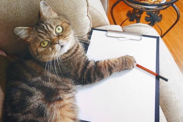 Cat-checklist.jpg