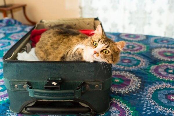 Cat-in-suitcase.jpg