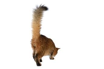 Happy-cat-tail-up.jpg