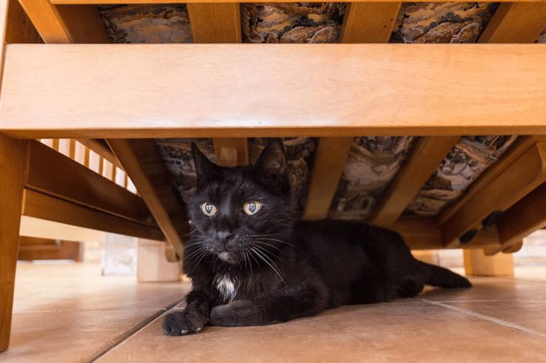 Cat hiding 2