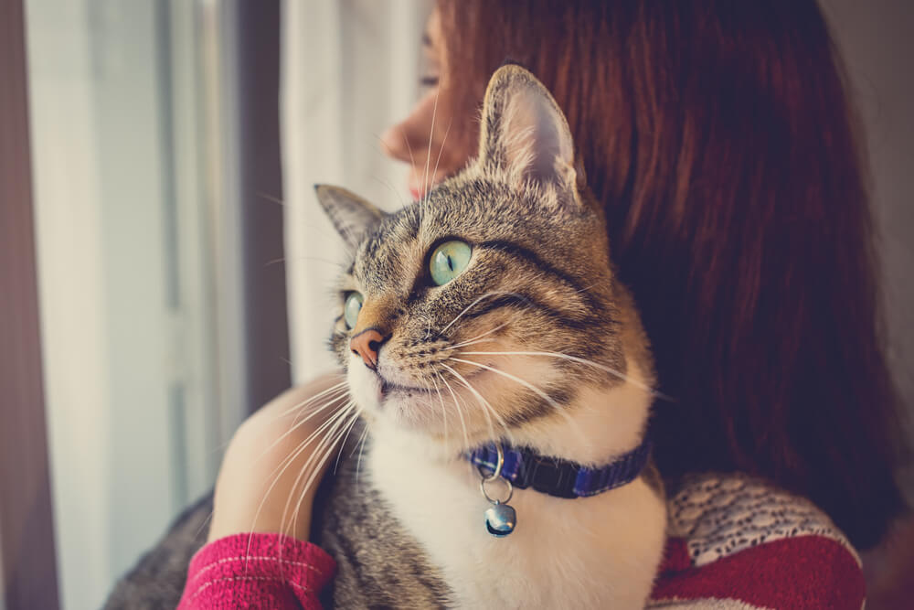 cat held by woman owner
