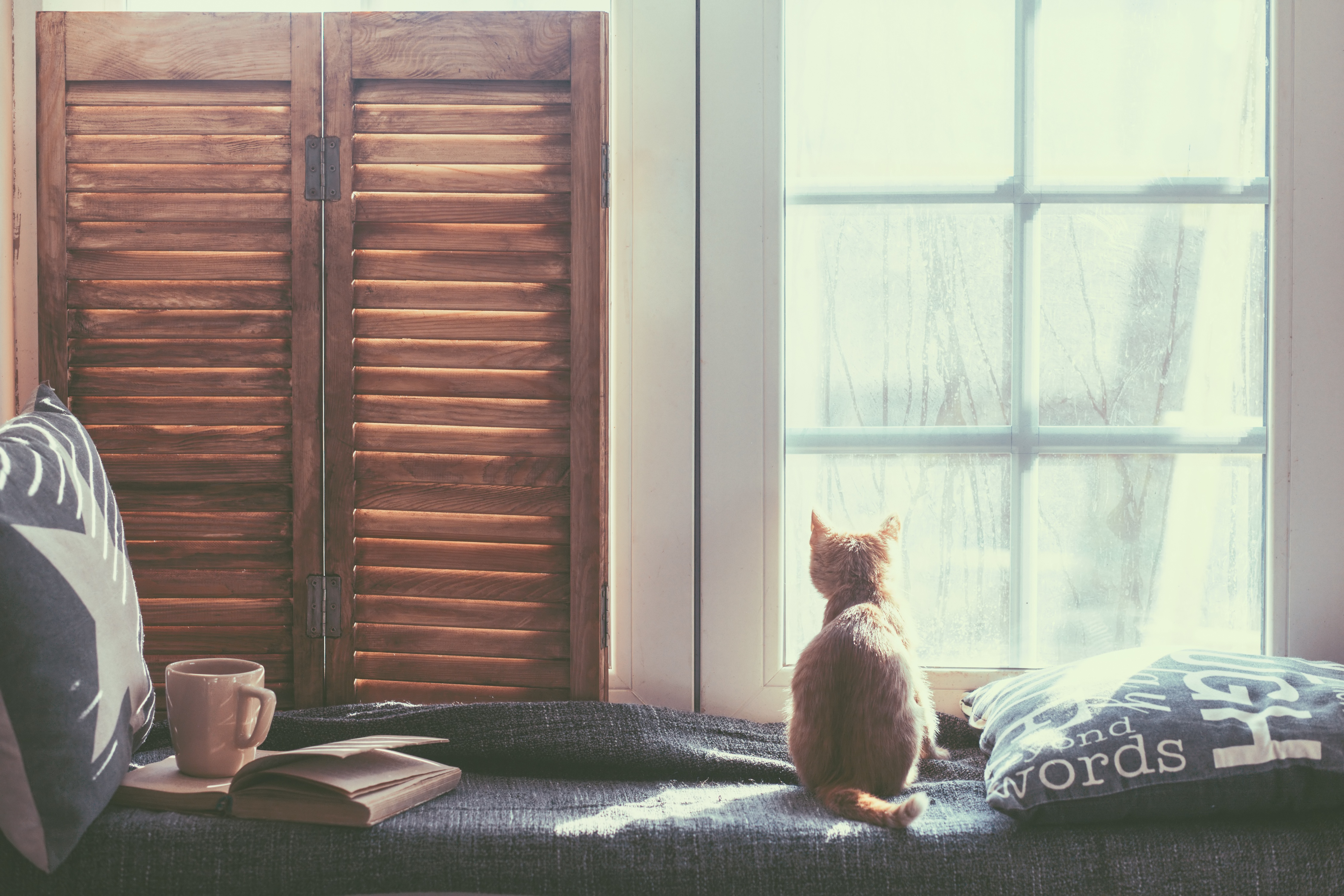 Small ginger cat looks out the window