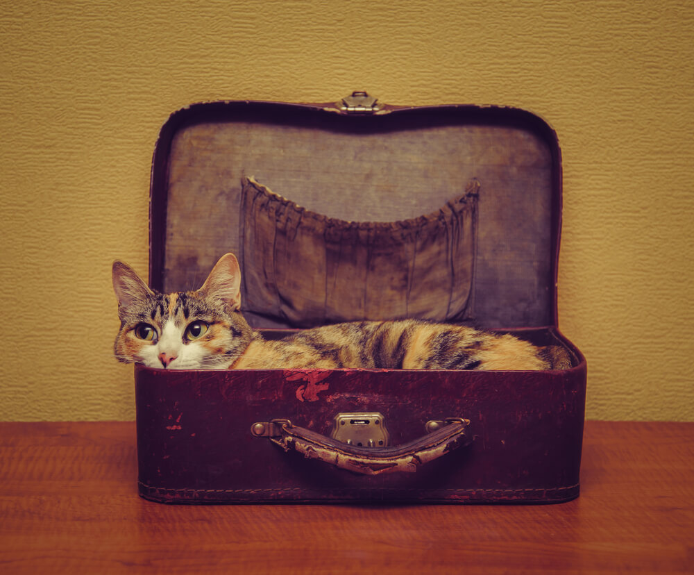 cat in a suitcase ready to go on holiday