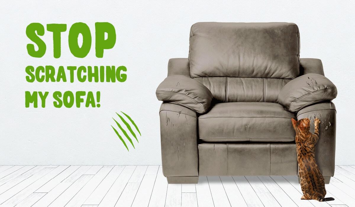 FEL105-Save-Your-Sofa-Banner-Gif-(Mar18) (1)