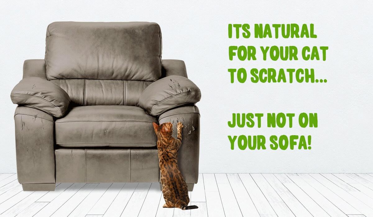 FEL107-Save-Your-Sofa-Banner-Gif-(Mar18) (1)