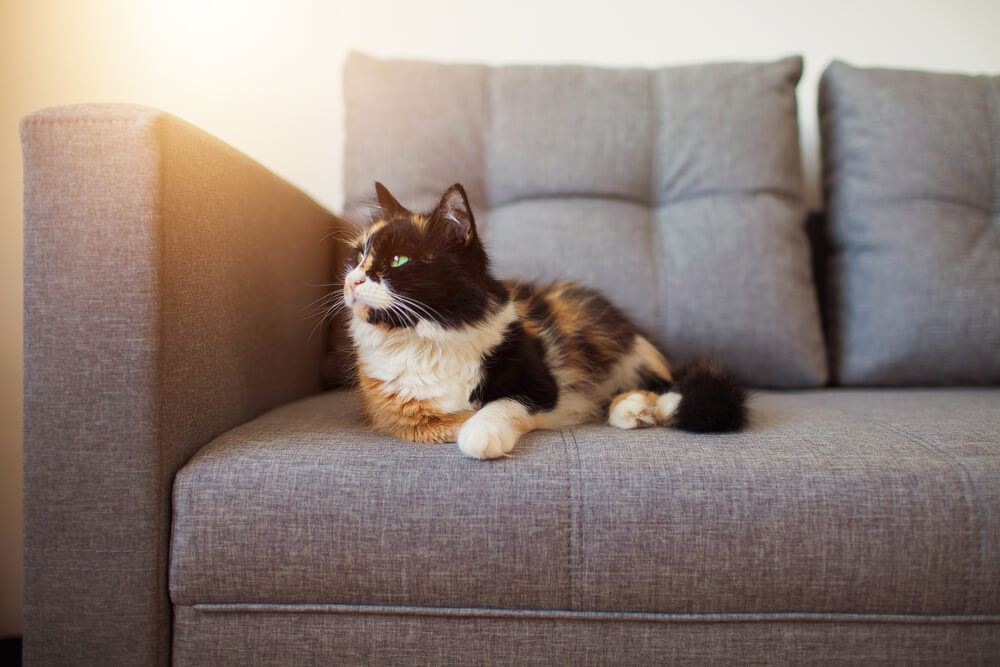 How To Stop Your Cat From Scratching The Sofa