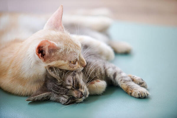 two cats sleeping peacefully together