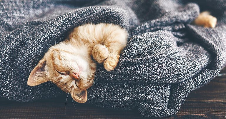 How To Train A Kitten To Sleep At Night