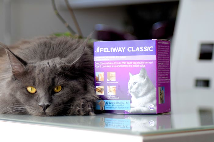 Long+term+benefits+of+using+FELIWAY+march+editorial+02