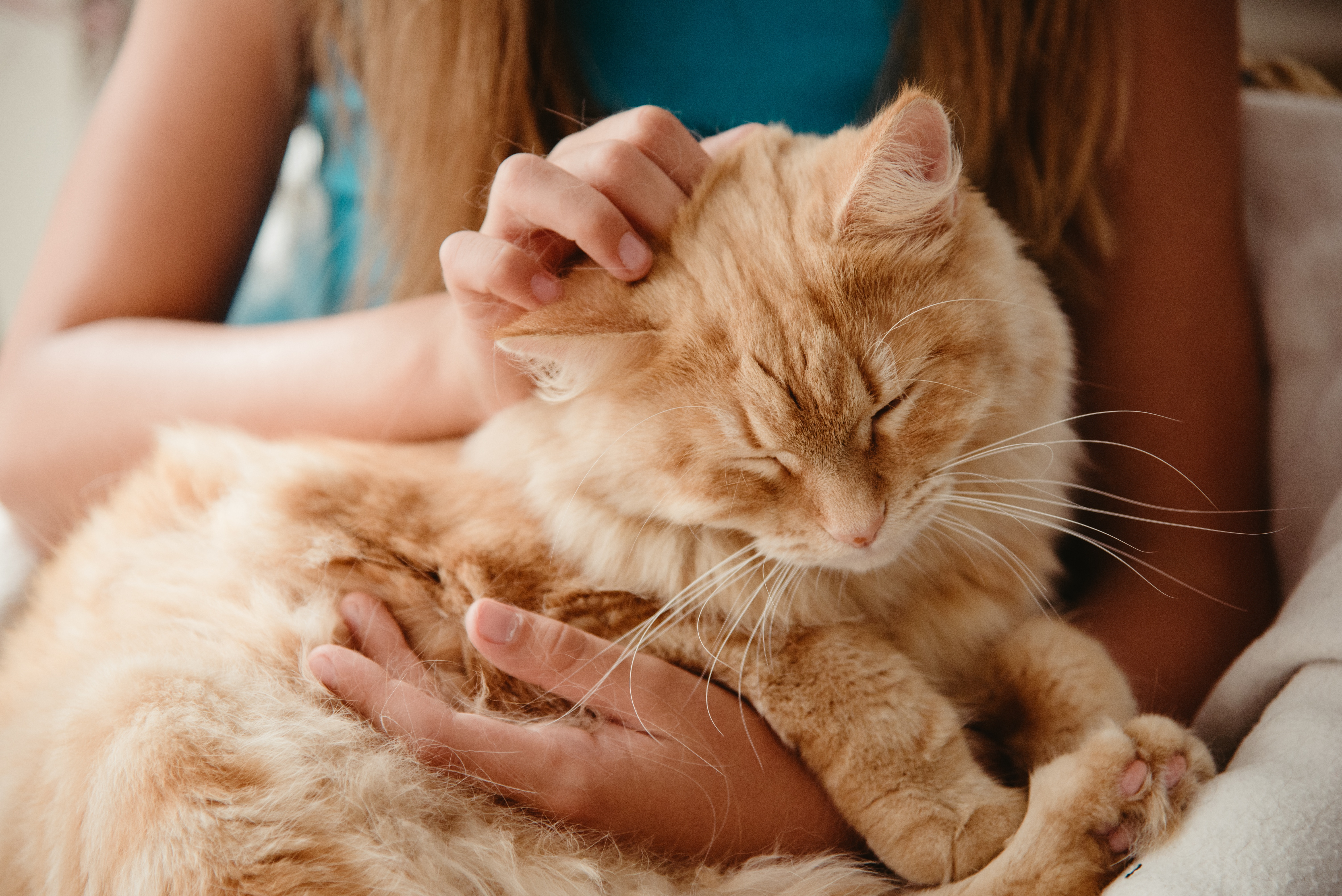 React+to+vote++-+signs+of+cat+happiness+(cat+on+lap)+HT+150118-RAW