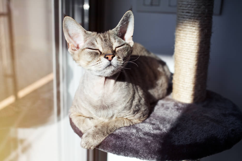 Calm cat enjoying the sun for the cat tree