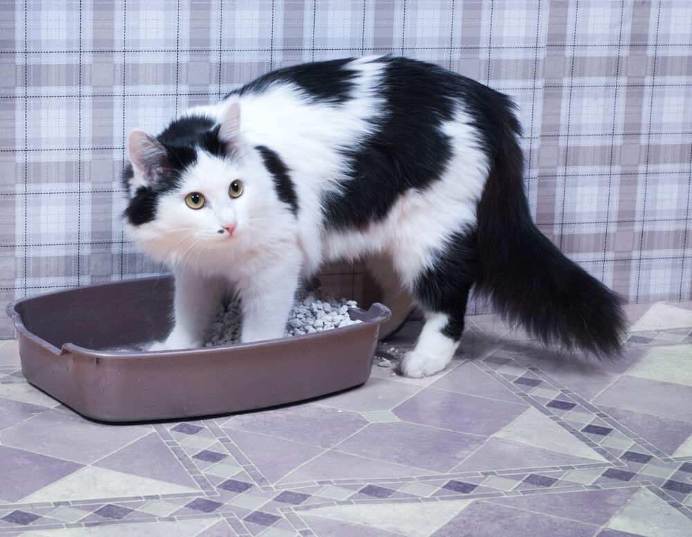cat not sure whether it can go in the litter box