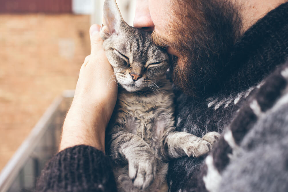 relaxed kitten kissed on the head by a young man