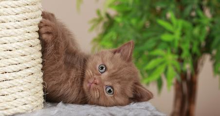 kitten 3-1
