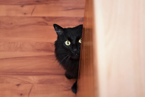 black cat hiding behind the counter