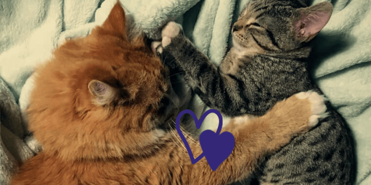7 Tips to Introduce a Kitten to an Older Cat
