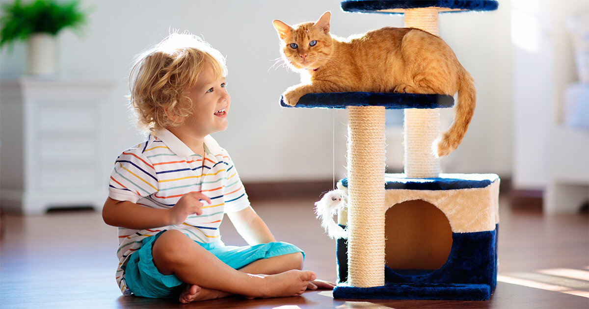 Does My Kitten Need a Scratching Post_1