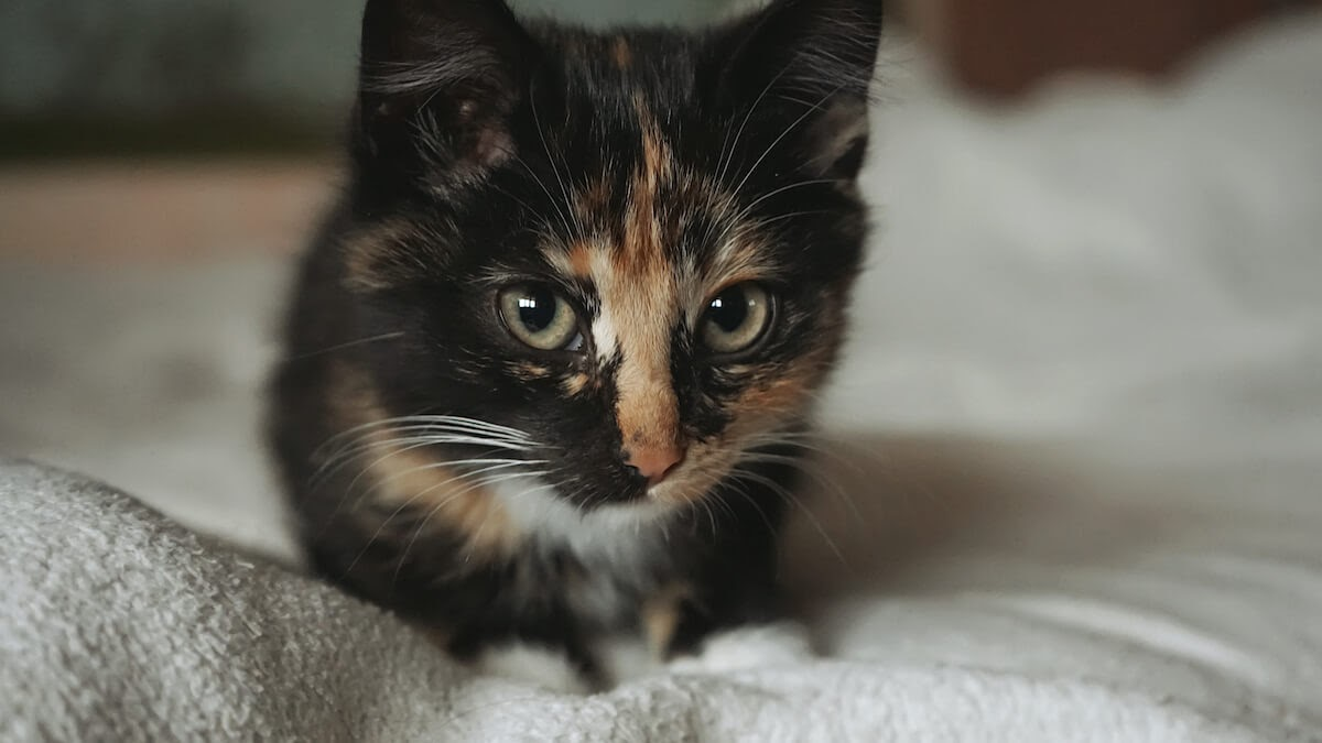 Signs Of Anxiety In Cats To Watch For Is Your Pet Concerned