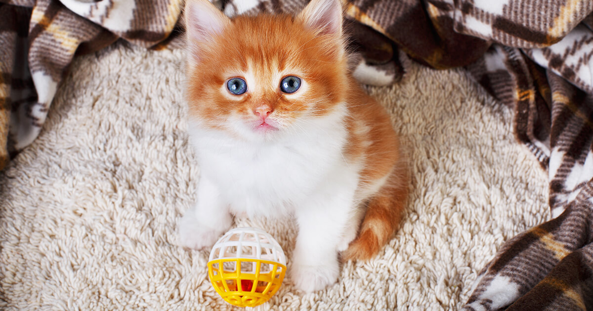 How to Train a Kitten & What Your Kitty Needs to Learn_2