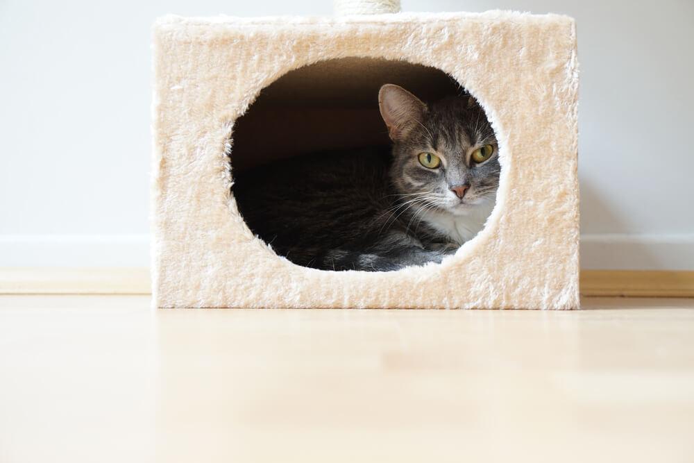 cat in a fur box