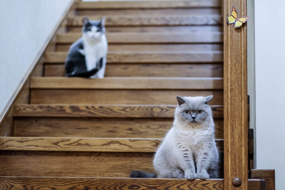 cats guarding stairs