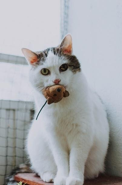 Cat with toy mousePhoto by fotografierende from Pexels