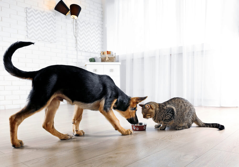 dog eating out of the cat's bowl