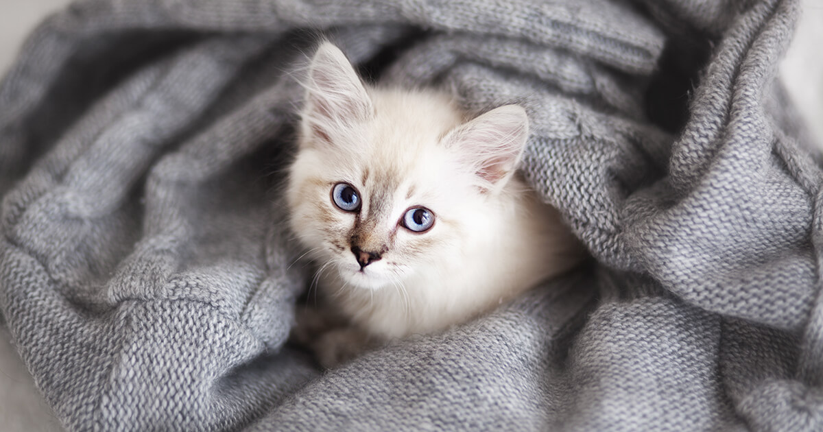 anti anxiety medication for cats