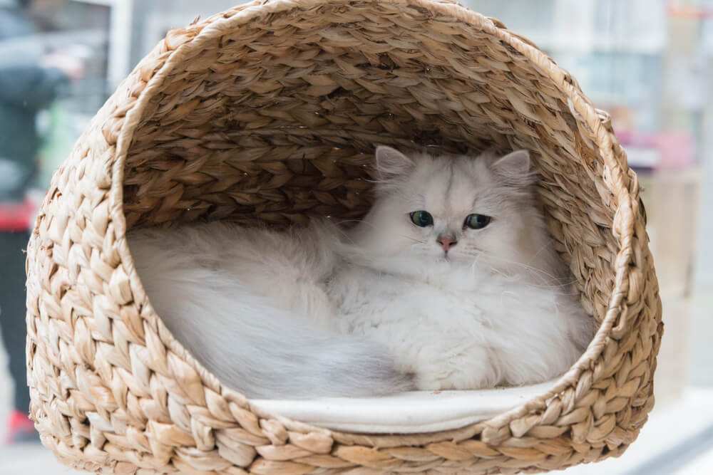 fluffy white cat in a cosy basket