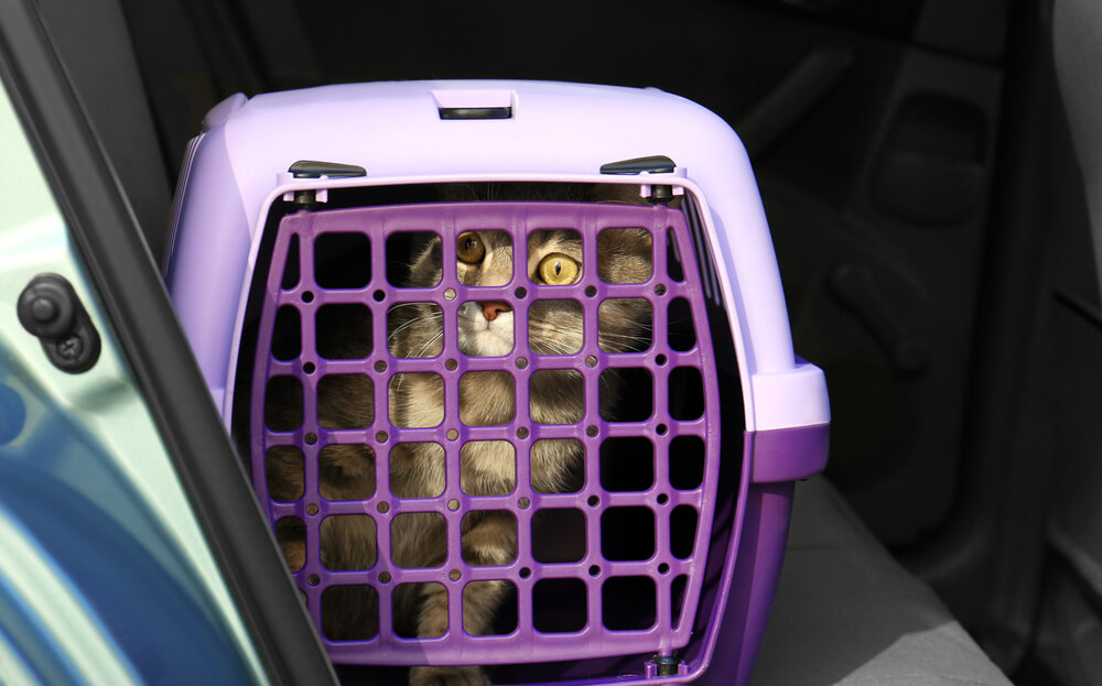 cat in a carrier ready to travel in a car